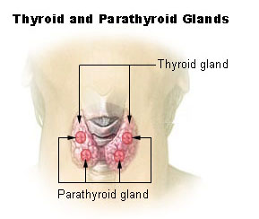 thyroid_parathyroid_stealth_epidemic
